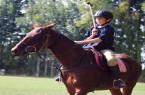 horseriding_polo